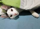 Komm unter meine Decke