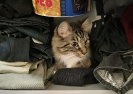 Willy im Schrank