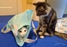 Willy und Jupi mit der Tasche